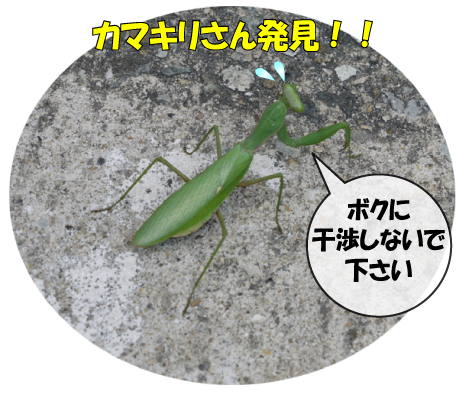 10_20091020000625.jpg