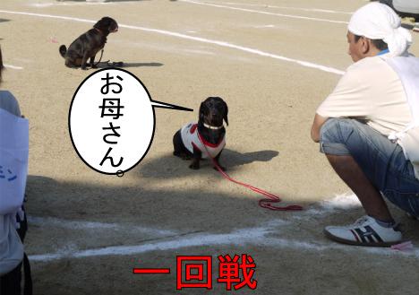 10_20091112175025.jpg