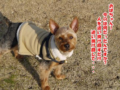 11_20090310130032.jpg