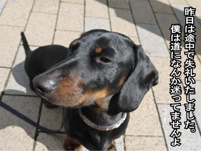 11_20090318111035.jpg