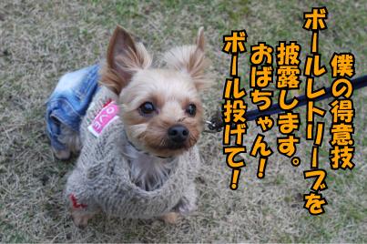 11_20090327010331.jpg