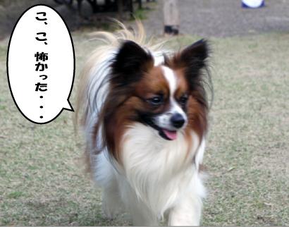 11_20090401115707.jpg
