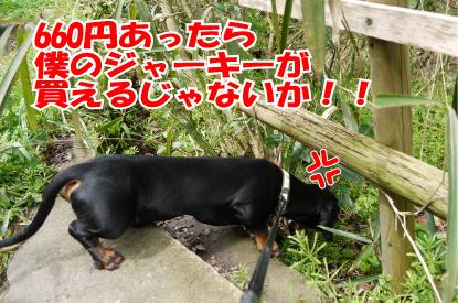 11_20090407013649.jpg