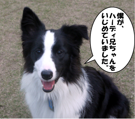 11_20090415135041.jpg
