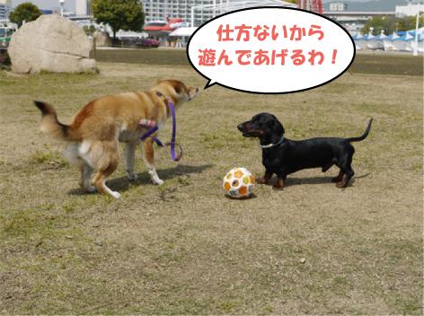 11_20090503023950.jpg