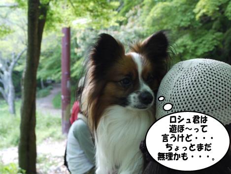 11_20090505132624.jpg