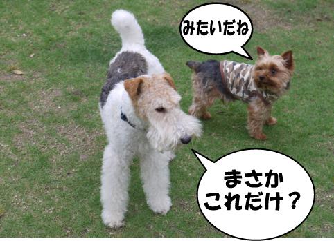 11_20090523233334.jpg