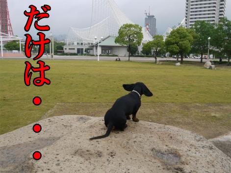 11_20090611192235.jpg