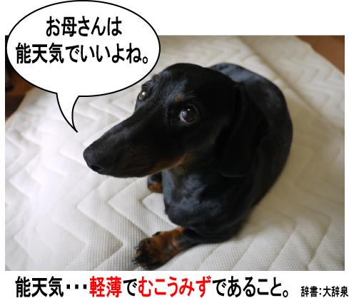 11_20090707204548.jpg