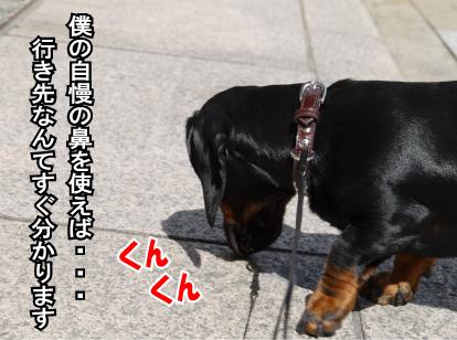 12_20090318111611.jpg
