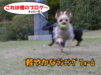 12_20090327010513.jpg