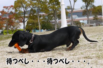 12_20090328230210.jpg