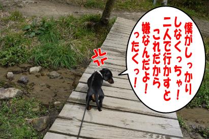 12_20090407013750.jpg