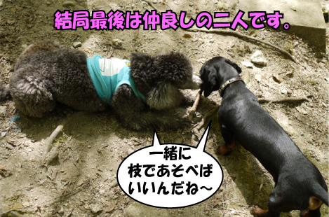 12_20090414115712.jpg