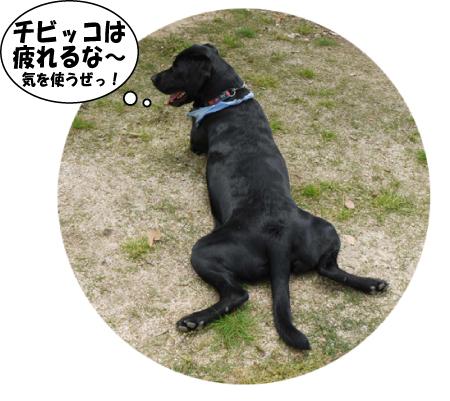 12_20090507021606.jpg