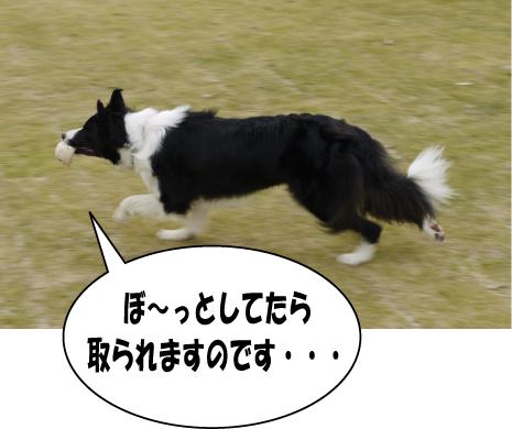 12_20090621153339.jpg