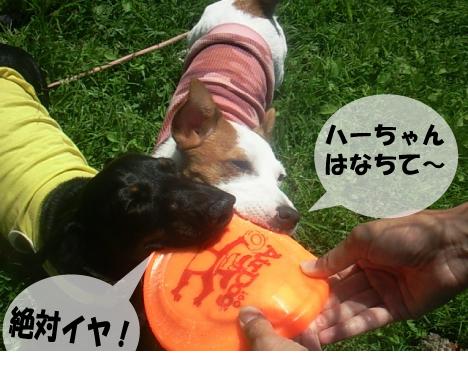 12_20090816152040.jpg