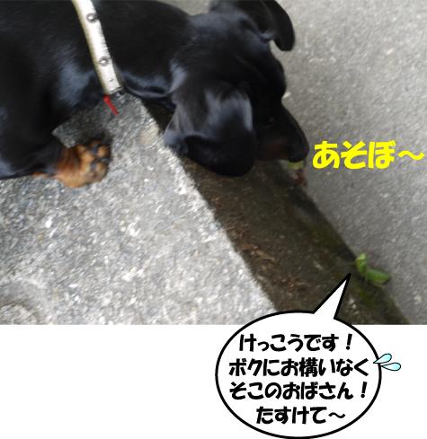 12_20091020001213.jpg
