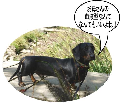 12_20091022013716.jpg
