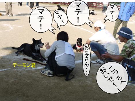 12_20091112180217.jpg