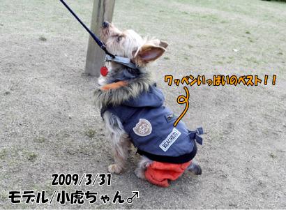 13_20090401121720.jpg