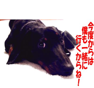 13_20090407014005.jpg