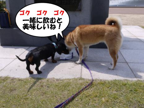 13_20090503024321.jpg