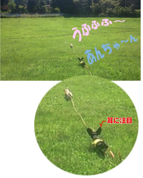 13_20090816152420.jpg