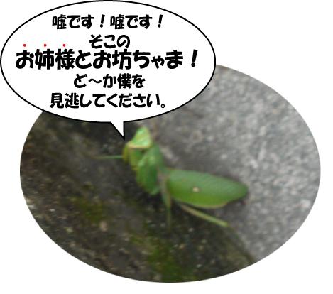 13_20091020001443.jpg
