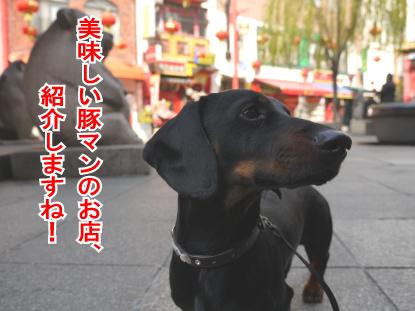 14_20090318112144.jpg