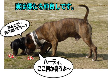 14_20090409162021.jpg