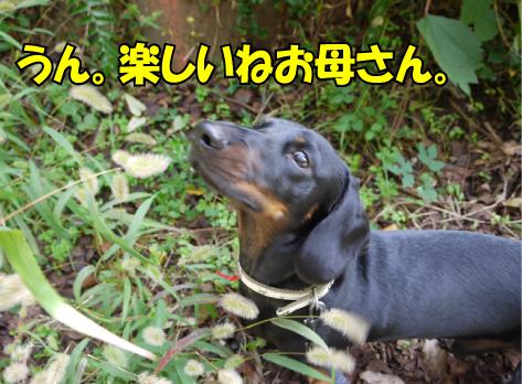 14_20091020001811.jpg