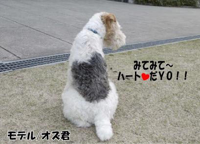 15_20090401125611.jpg