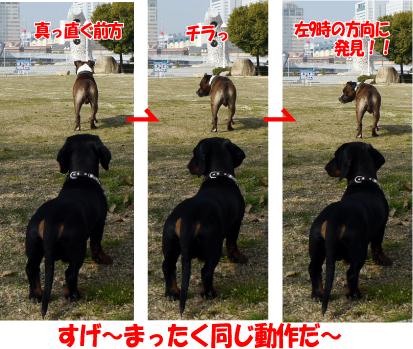 15_20090409162642.jpg