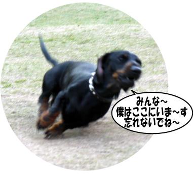 16_20090401125714.jpg