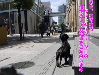 17_20090318114336.jpg