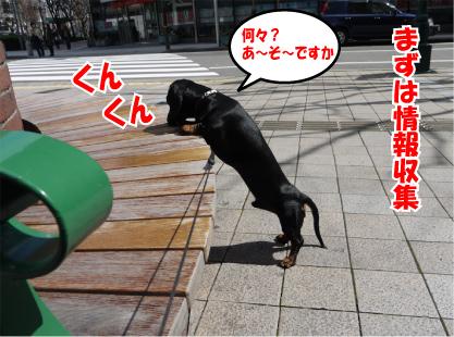 18_20090318114806.jpg