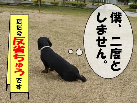 1_20090518171634.jpg