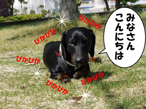 1_20090530152209.jpg