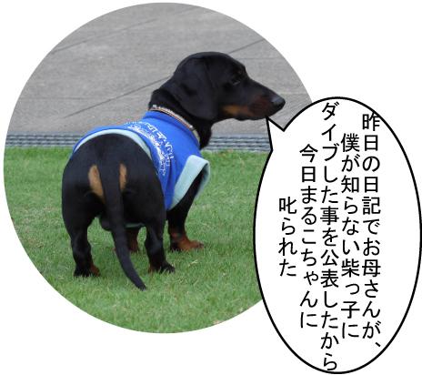 1_20090617002300.jpg