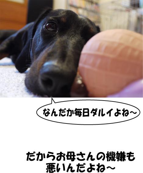 1_20090728212631.jpg