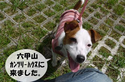 1_20090816141451.jpg
