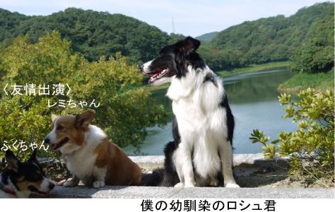 1_20091003013045.jpg