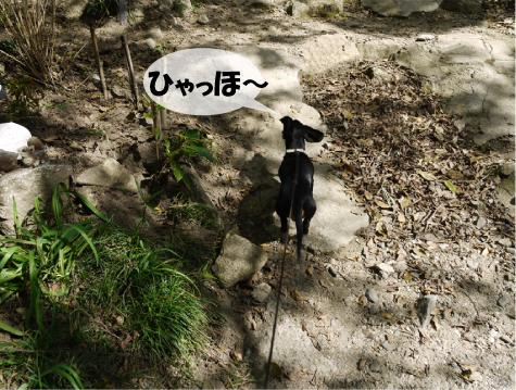 1_20091019230532.jpg