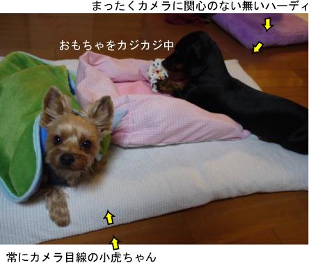 1_20091231003327.jpg