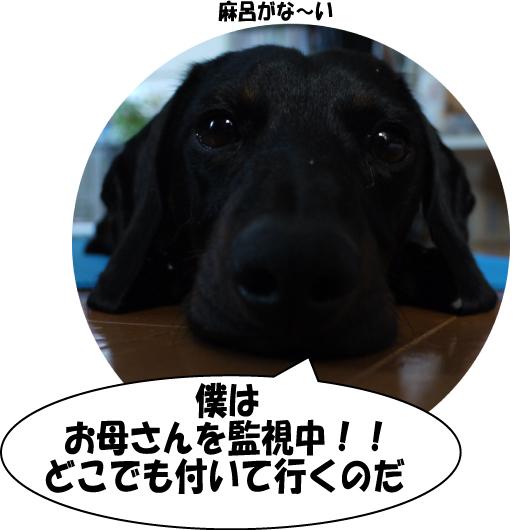 21_20090703023835.jpg