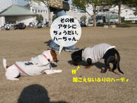 21_20091217024716.jpg