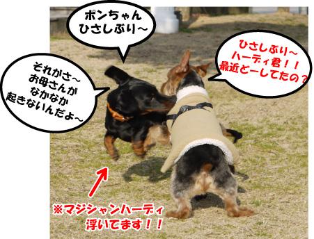 2_20090310123252.jpg