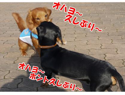 2_20090312004327.jpg