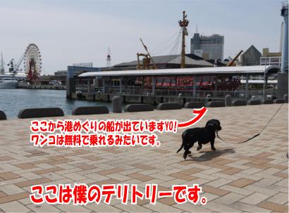 2_20090328221145.jpg